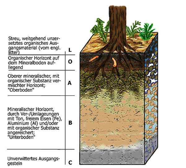 Lebensraum boden for Boden zusammensetzung