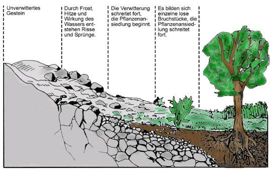 Bodenentwicklung for Definition von boden